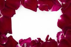 Grupo de Rose Petals vermelha, quadro, da c?pia do espa?o terra para tr?s fotografia de stock royalty free