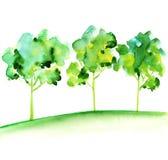 Grupo de árvore Fotografia de Stock Royalty Free
