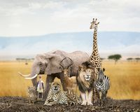 Grupo de Safari Animal Friends imagem de stock royalty free
