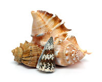 Grupo de seashells Fotos de archivo