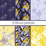 Grupo de seis testes padrões de flor sem emenda com íris Fotos de Stock Royalty Free