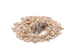 Grupo de sementes de girassol Imagem de Stock