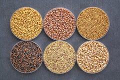 Grupo de sementes emergentes orgânicas Fotos de Stock Royalty Free
