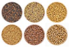 Grupo de sementes emergentes orgânicas Fotografia de Stock Royalty Free