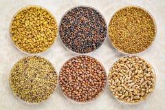 Grupo de sementes emergentes orgânicas Imagens de Stock Royalty Free