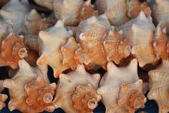 Grupo de shell bonito arranjado em ordem fotografia de stock royalty free