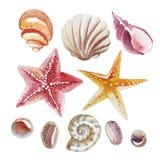 Grupo de shell, de estrela do mar tópica e de seixo da aquarela isolados Fotografia de Stock Royalty Free