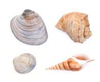 Grupo de shell do mar isolados no branco Fotos de Stock Royalty Free