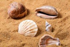 Grupo de shell do mar na areia em uma praia Foto de Stock