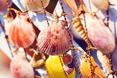 Grupo de shelles del mar Foto de archivo