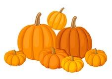 Grupo de siete calabazas anaranjadas. Fotos de archivo