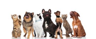 Grupo de siete lindos y animales domésticos curiosos que miran para arriba imágenes de archivo libres de regalías