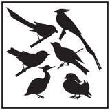 Grupo de silhueta diferente dos pássaros ilustração Preto-branca Imagens de Stock Royalty Free