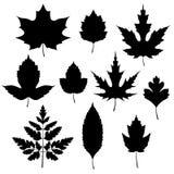 Grupo de silhuetas das folhas de outono Fotografia de Stock