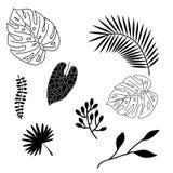 Grupo de silhuetas das folhas de palmeira isoladas no fundo branco Imagem de Stock
