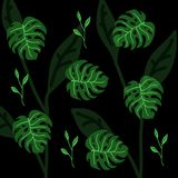 Grupo de silhuetas das folhas de palmeira isoladas sobre em um fundo preto Fotografia de Stock Royalty Free