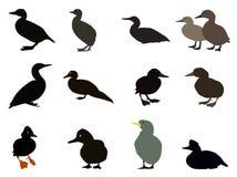 Grupo de silhuetas de tipos diferentes de patos existentes Vetor ilustração stock