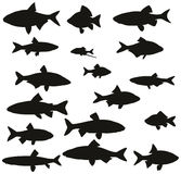 Grupo de silhuetas pretas de peixes comuns do rio Imagem de Stock