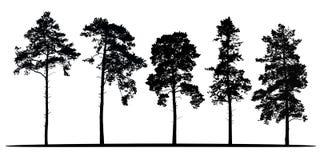 Grupo de silhuetas realísticas do vetor de árvores coníferas - isolat ilustração stock
