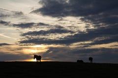 Grupo de siluetas de los caballos en la puesta del sol Imágenes de archivo libres de regalías