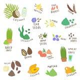 Grupo de superfoods diferentes Isolado no branco Imagem de Stock Royalty Free
