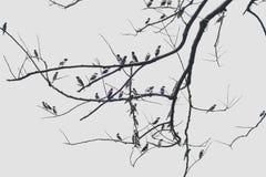 Grupo de terra dos pássaros no ramo seco Fotos de Stock