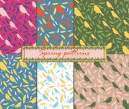Grupo de 6 testes padrões grupo de texturas sem emenda com pássaros e penas fea colorido Foto de Stock Royalty Free