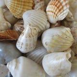Grupo de tipo diferente de shell bonitos naturais junto Fotografia de Stock