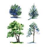 Grupo de tipos diferentes árvores da aquarela Fotos de Stock Royalty Free
