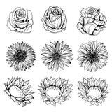 Grupo de tiragem das flores ilustração stock