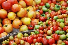Grupo de tomate Imagens de Stock