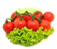 Grupo de tomate e de salada verde no fundo branco imagem de stock