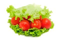 Grupo de tomate e de salada verde no fundo branco fotografia de stock