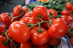 Grupo de tomates de la vid Imagen de archivo