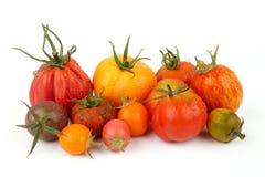 Grupo de tomates exóticos Foto de Stock Royalty Free