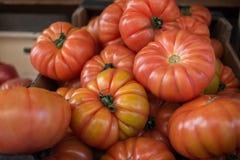 Grupo de tomates frescos vermelhos fotografia de stock royalty free
