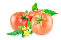 Grupo de tomates maduros com folhas em um fundo branco foto de stock royalty free