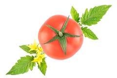 Grupo de tomates maduros com folhas em um fundo branco Vista f fotos de stock royalty free