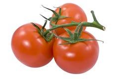 Grupo de tomates vermelhos Imagens de Stock