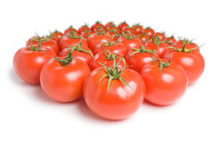 Grupo de tomatoes-14 Imagens de Stock