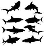 Grupo de tubarões das silhuetas em um fundo branco ilustração royalty free