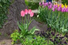 Grupo de tulipanes rojos en un jardín botánico en primavera Fotografía de archivo libre de regalías
