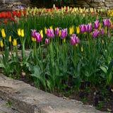Grupo de tulipanes rosados en un jardín botánico en primavera Foto de archivo