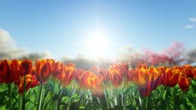 Grupo de tulipas alaranjadas, vermelhas contra o céu Fotos de Stock