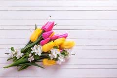 Grupo de tulipas brilhantes da mola e do flo amarelos e cor-de-rosa da árvore de maçã Foto de Stock