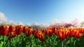 Grupo de tulipas na luz solar contra o céu azul Imagem de Stock
