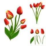 Grupo de tulipas poligonais vibrantes no fundo branco Isolado fácil alterar Imagens de Stock Royalty Free