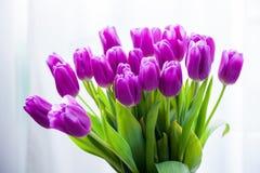 Grupo de tulipas roxas fotografia de stock royalty free