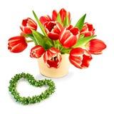 Grupo de tulipas vermelhas com bordas brancas e o coração verde isolados sobre Foto de Stock Royalty Free