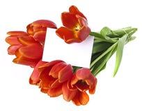 Grupo de tulipas vermelhas e de um cartão vazio Fotos de Stock